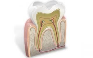 Строение передних зубов