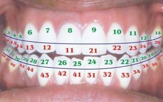 Обозначение зубов в стоматологии