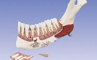 Челюстная кость после удаления зуба
